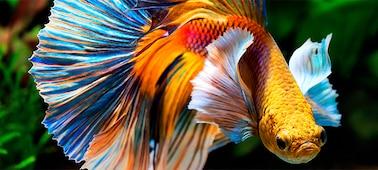Imagen de un pez con detalles en 4K