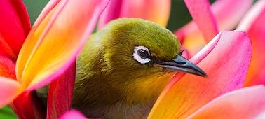 Imagen de un ave con detalles en 4K