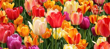 Detalle de flores con tonos y matices sutiles en los pétalos